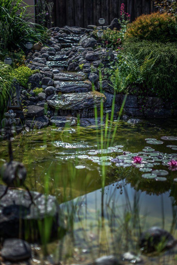 Gartenteich - Höri Gartenbau - Wangen