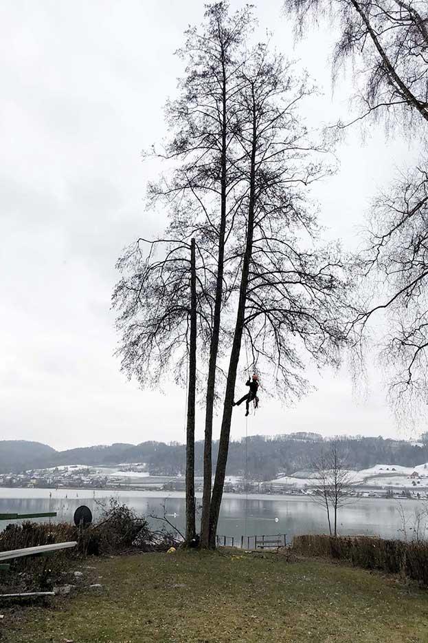 Baumklettern - Höri Gartenbau - Wangen