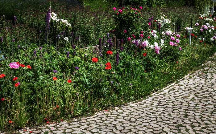 Pflanzberatung - Höri Gartenbau - Wangen