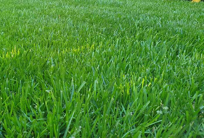 Rasen - Höri Gartenbau - Wangen
